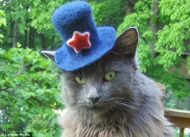 Devotion: Some pet owners spend hours making cat-sized hats for their furry friends