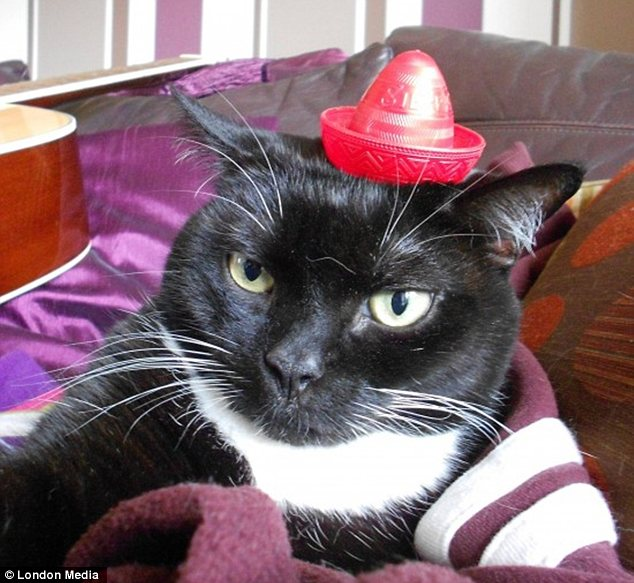 Inviting: This cat reclines in its purple boudoir, sporting an exotic-looking mini sombrero