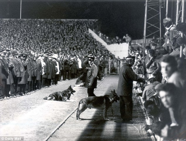 Stand off: Police officers form a cordon and dogs are brought in to prevent Millwall fans invading the pitch during the FA Cup sixth round tie at Luton Town in March 1985