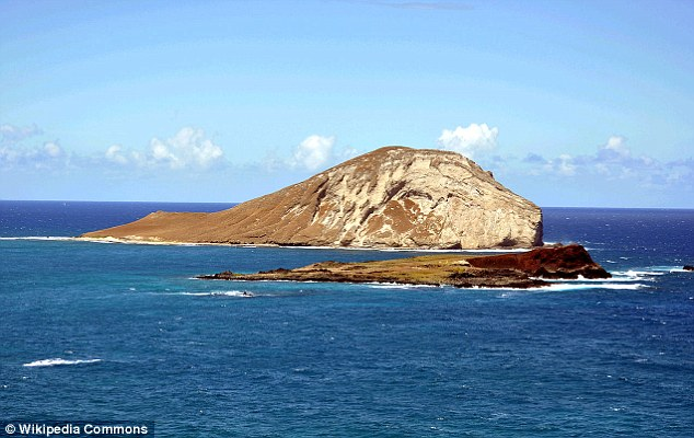 Safe haven: A volunteer discovered the injured seal on Manana Island, also known as Rabbit Island off Oahu, which is a wildlife sanctuary where people are not allowed