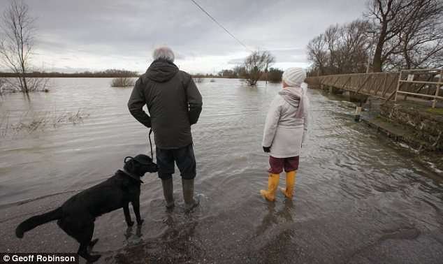 Extreme: Walkers in Cambridgeshire found their way blocked today after the River Ouse burst its banks