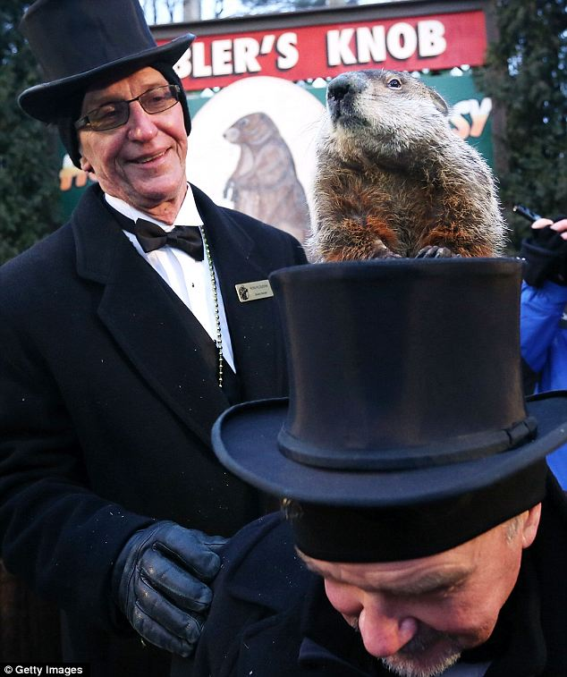 Punxsutawney Phil climbs on the top hat of groundhog co-handler John Griffiths as co-handler Ron Ploucha looks on