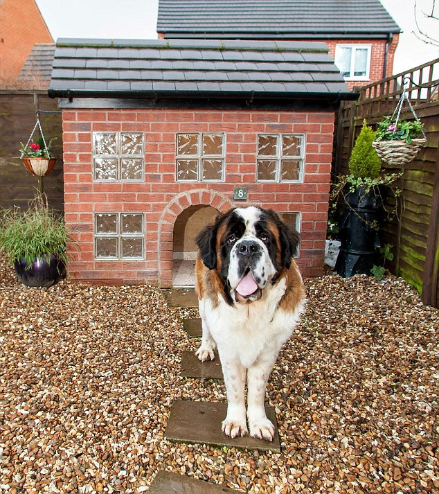 Wellington the St Bernard enjoys roaming around his very own gravel drive which comes with patio steps and ceramic statues