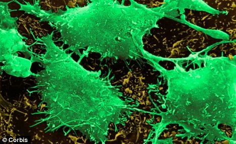 The small size of TIC10 also means it can cross the blood-brain barrier, which many anti-cancer drugs can't do, making it effective at targeting brain cancer cells (pictured)