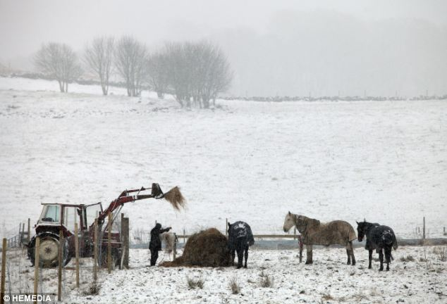 Still busy working: As snow hits Scotland again, a farmer tends to his horses in a field outside Kingseat in Fife