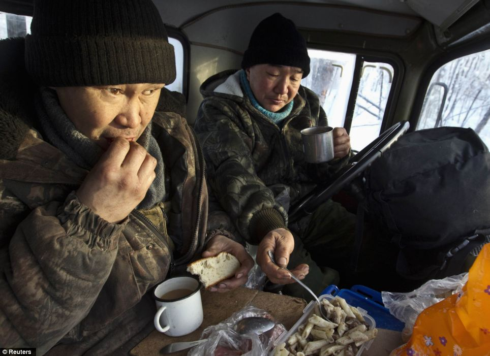 Sustenance: Lumberjacks Alexey Egorov, 45, and Semion VInokurov, 53, (left to right) lunch in the cabin of their truck in forest outside Tomtor. Doctors say locals don't suffer from malnutrition is that their animals' milk contains a lot of micronutrients