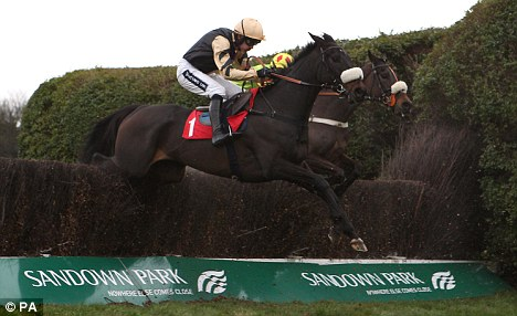 No go: Fago will not now run in the Arkle at Cheltenham