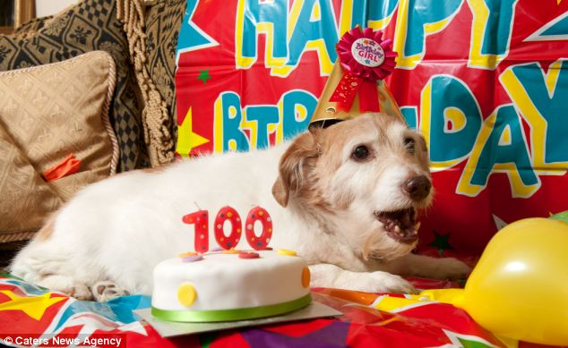 Daisy was once the runt of the litter. Now she is believed to be the UK's oldest living dog