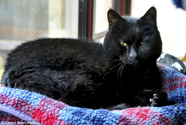 Guest: This black feline enjoys living at the hospice for felines but now its future is threatened
