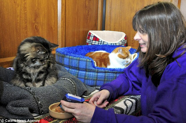 No place like home: Gill Andrews feeding Francis the cat who lives in the property