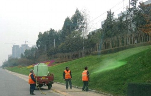 In the south-western city of Chengdu, China, city officials have been painting the grassy verges a rich shade of green