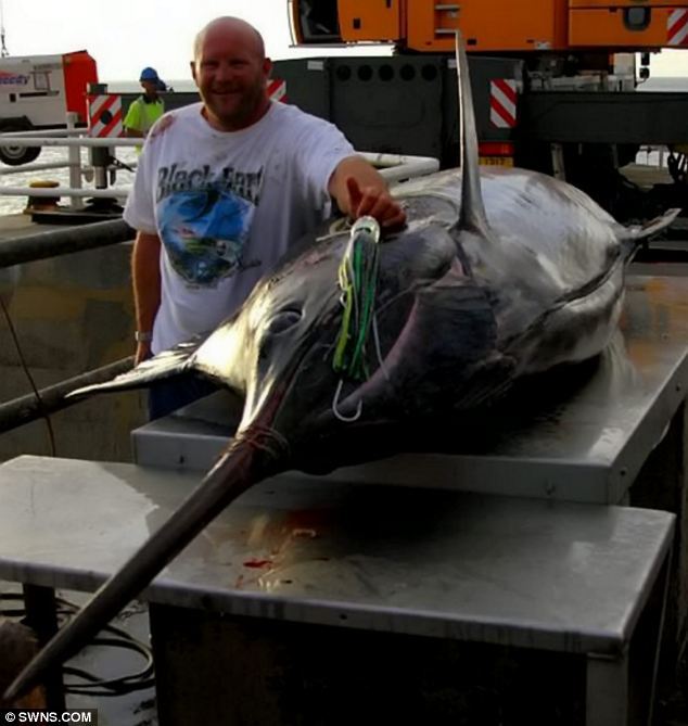 A man poses with the marlin - believed to be one of the biggest ever caught