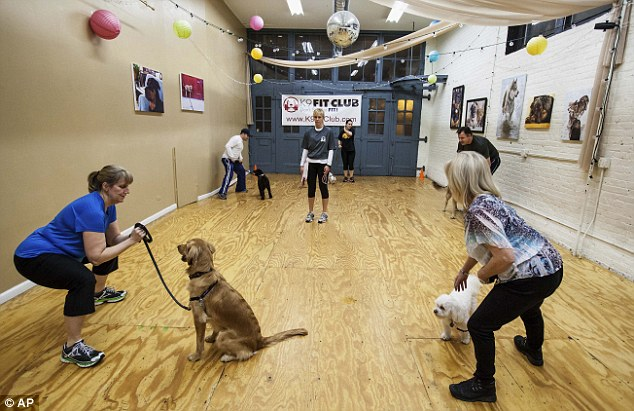 Trainers and tails: Owners and their dogs are seen during a class at the K9 Fit Club's Chicago location where members are allowed to bring their dogs to get fit together