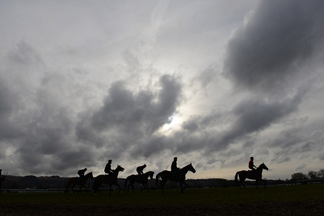 Ready for the festival: Morning on the gallops at Cheltenham