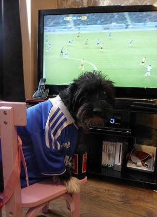 Barking mad: Chelsea fan Max the mongrel