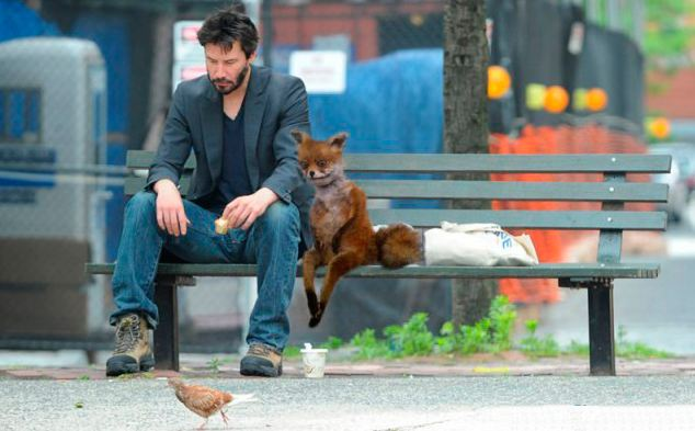 The wonders of Photoshop mean Stoned Fox has joined film star Keanu Reeves on a park bench...