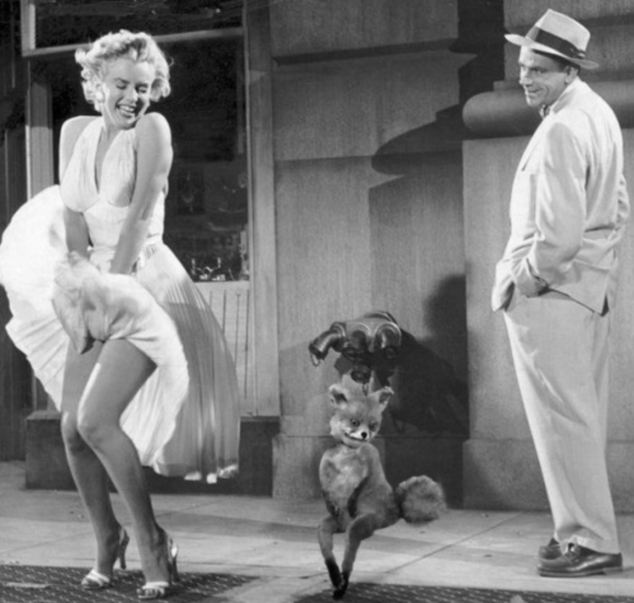 Internet users even created Stoned Fox's tail's own Seven Year Itch moment with Marilyn Monroe thanks to Photoshop