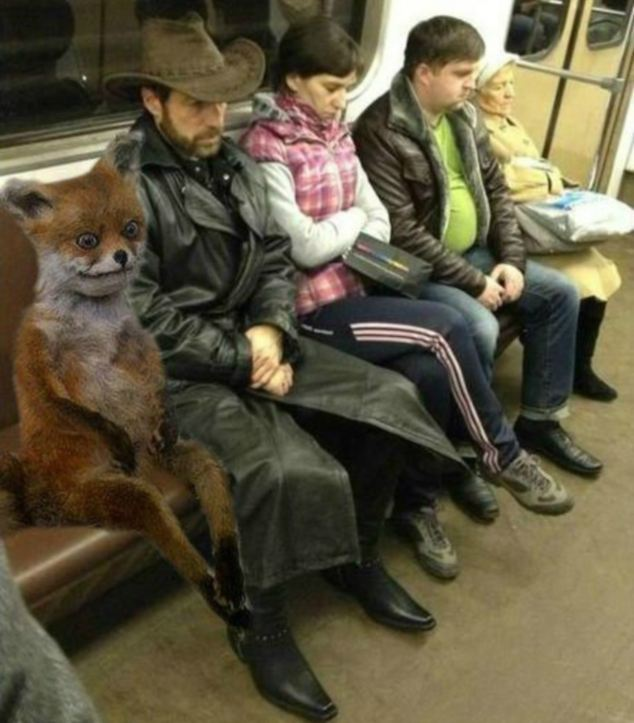 Stoned Fox takes a ride on the Metro