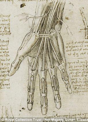 Leonardo da Vinci's depiction of the  bones, muscles and tendons of the hand, c.1510-11