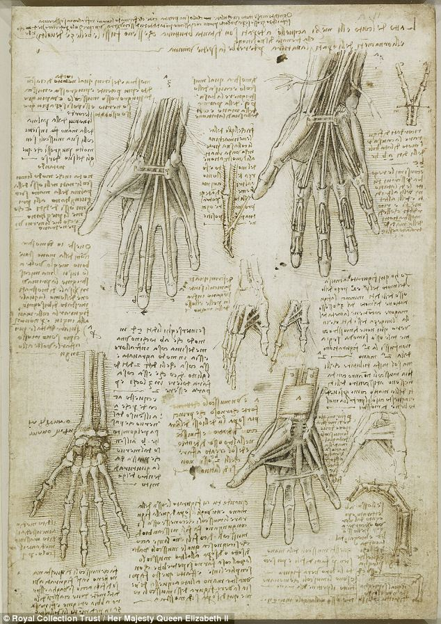 Incredibly detailed: The full image of da Vinci's sketches bones, muscles and tendons of the hand demonstrates the layered structure of the hand through four dissections