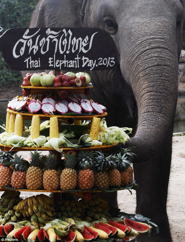 It's my party: An elephant gets his trunk on the treats offered at Khao Kheow Open Zoo in Chonburi province, east of Bangkok