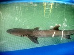 Shark dies after being shipped from New York to Los Angeles for a Kmart commercial sparking investigations from animal rights groups
