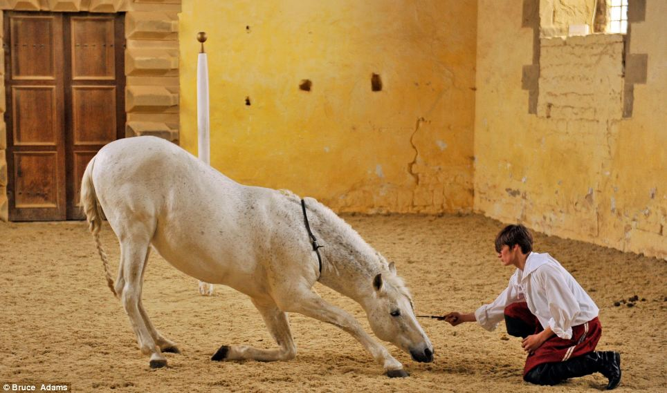 Rider Ben Atkinson, 19, with Almonzor' a 14-year-old Spanish Andalusian horse performing in the castle's original riding room