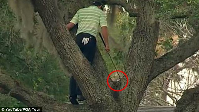 There it is: Garcia finds his ball (circled) up the tree