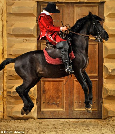 Ben Atkinson,19, on  'Ocle' a 6 year old Spanish Andalusian horse performing a 'Capriole' where all four of the horses legs are off the ground at once in the castle's original riding room