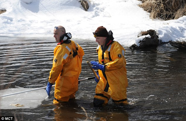 Wading in the water: Divers search a shallow creek near Lake Keller for clues and evidence in the disappearance of Kira Trevino