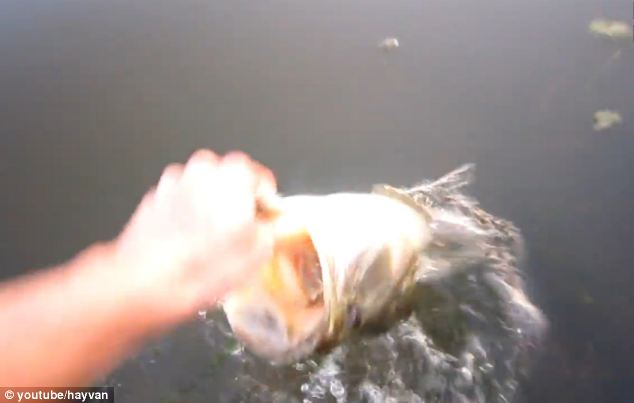 The angler quickly withdraws his hand and the fish follows