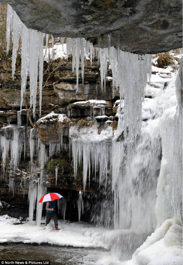 A walker stepped under an impressive icicle covered cliffside in County Durham in freezing conditions today