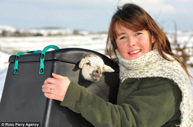 Woolly warmer: Sheep farmer Sally Howe with a newborn lamb at her farm in Huddersfield, West Yorkshire