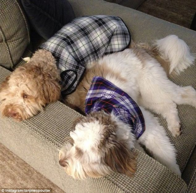 It's a dogs life: Poulter's other dog Enzo (right) joins in the fun by wearing a bandana