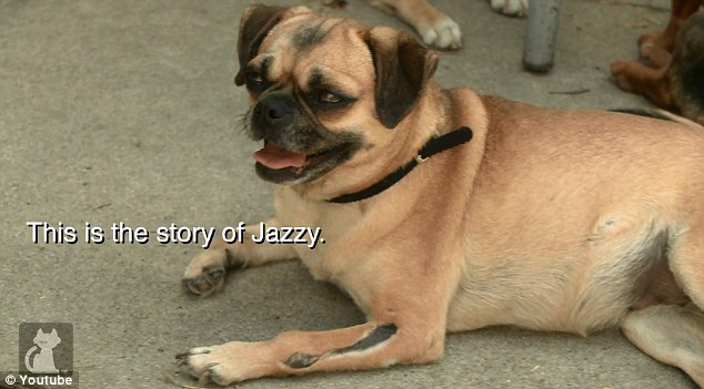 A vet established that both Jazzy¿s front legs had been broken by blunt force trauma