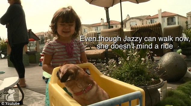 Now Jazzy enjoys her new life living with a family in Ventura, California