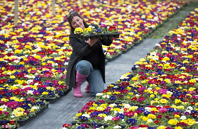 Thrown out: Some flower retailers are likely to go to the wall because the harsh spring weather has seen sales slump
