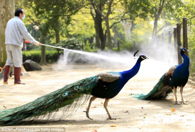 A health worker sprays disinfectant at bird area of Shanghai Zoo