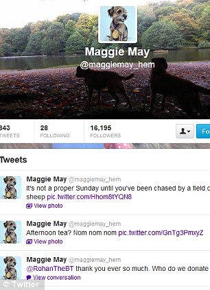 Tweet tweet: Taylor Swift's cat and Andy Murray's dog both have their own Twitter account to keep their fans updated
