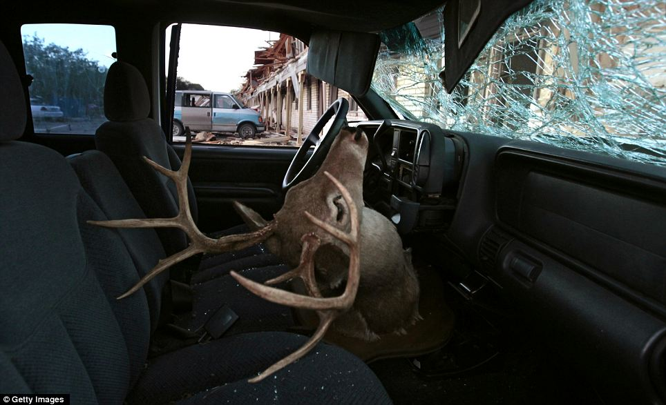 Thrown by the blast: A deer head mount sits inside a damaged car parked next to the apartment complex that was severely damaged