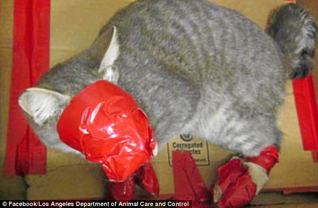 Cruel: The cat was close to death when he was discovered and couldn't breathe due to duct tape round his face