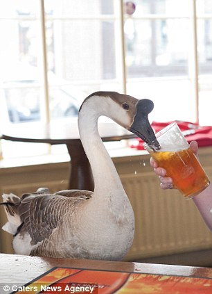 Gulping goose: Jack has is well-loved by the other bar patrons and wanders around 'chatting to them'