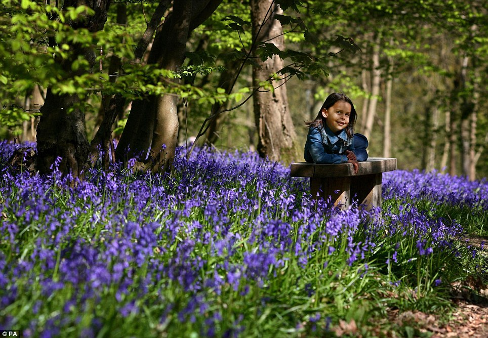 Isla Stanton, enjoying the warm weather amongst the bluebells in Hole Park, Rolvenden, Kent