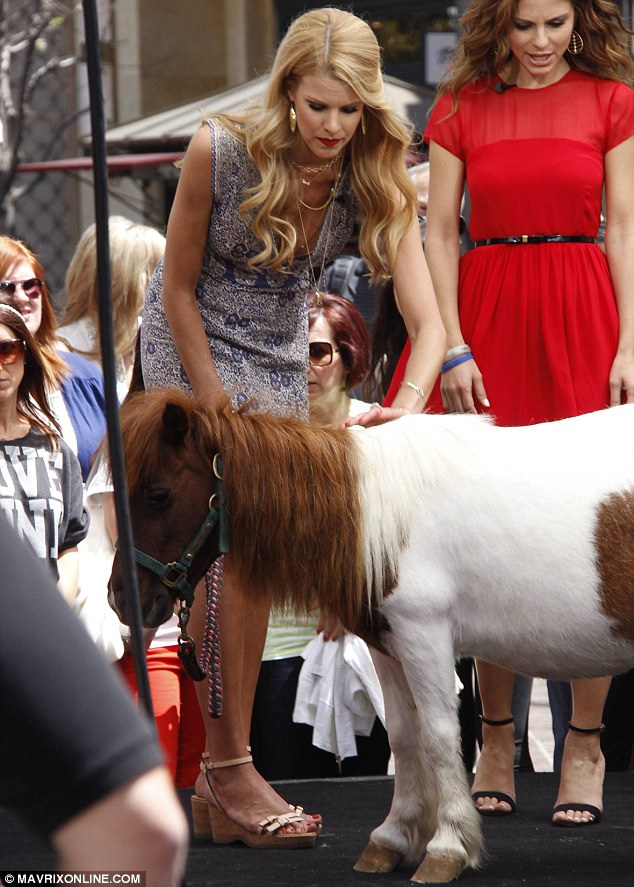 Wild horses: The pampered pony looked generally unimpressed to be featured on camera