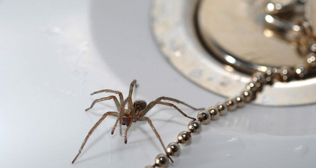Don't be frightened: Women expect real men to fearlessly remove spiders and be brave