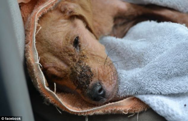 Xena was dehydrated and emaciated when she was brought to animal services. She weighed just four pounds