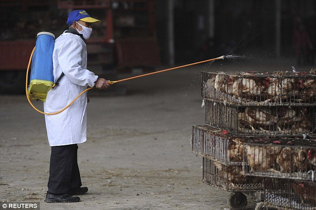 'Everything we eat is poison': News of the latest scandal to hit China coincides with an outbreak of bird flu that has sent poultry sales plummeting