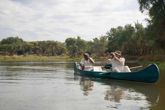 Mr Templer was leading a group of tourists along a stretch of the Zambezi river when they encountered a pod of around a dozen hippos wallowing in the shallows (file picture)