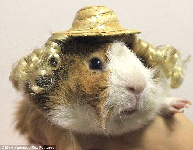 Makeover: The Guinea Pig Fashion website even stocks straw hats with clip-on hair extensions