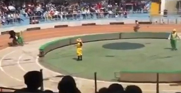 The animals crash into one another after one of the monkeys falls from its bike after about two laps